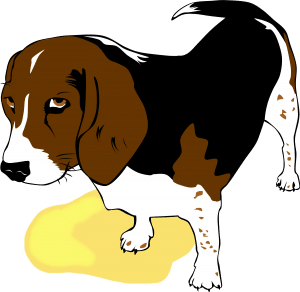 beagle_potty_accident