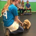 puppy_class