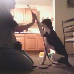dog_high_five