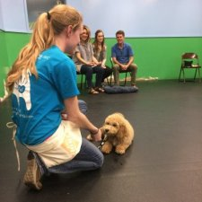 dog_trainer