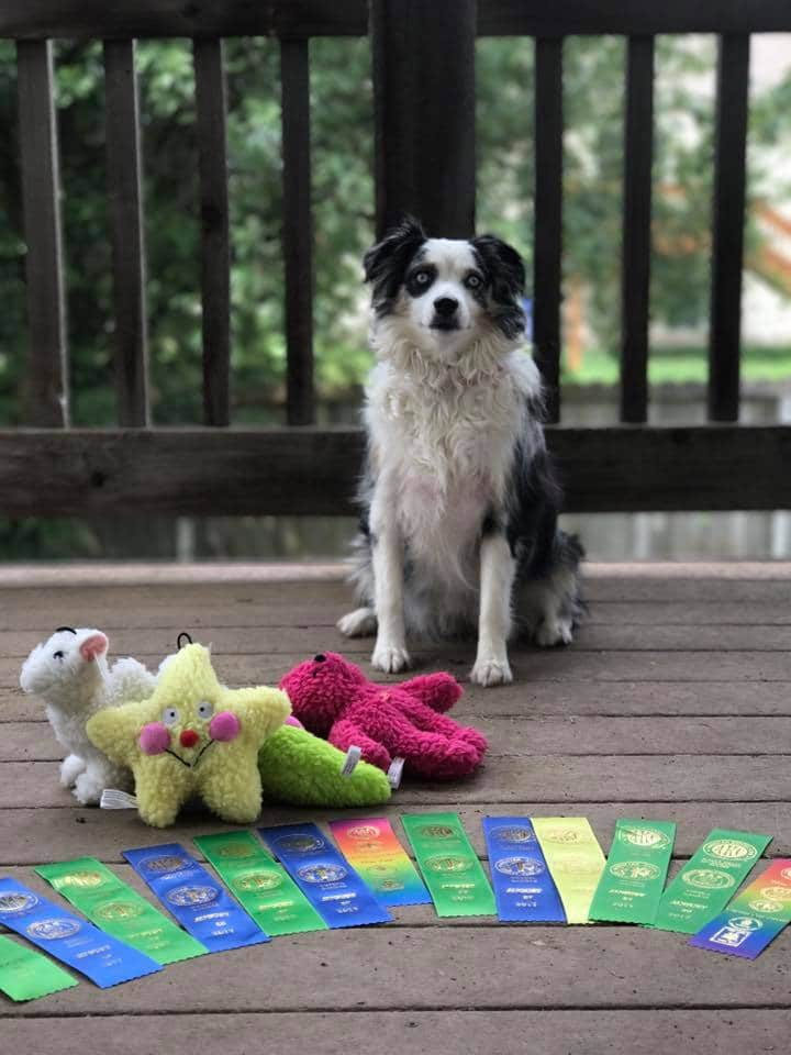 dog_with_dog_show_ribbons